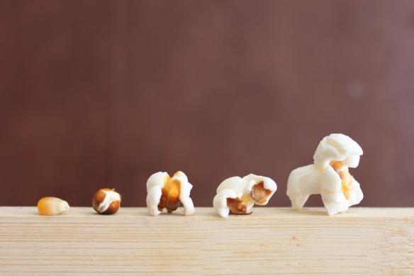 Evolution of Popcorn